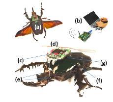 beetle-bot.jpg